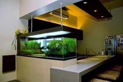 kitchen-tankt.jpg