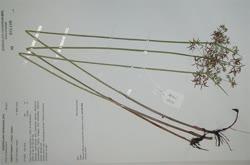 00-0-Copr_2020-Queensland_Herbariumt.jpg