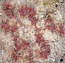 00-0-Copr_2020-Burke_Herbariumt.jpg