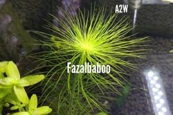 00-0-Copr_2020-Fazal_Baboot.jpg