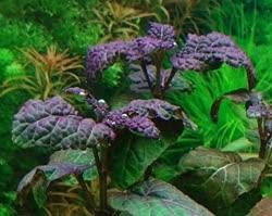 01-0-Copr_2020-Water_Plantst.jpg