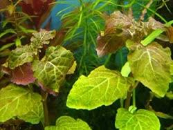 02-0-Copr_2020-Water_Plantst.jpg